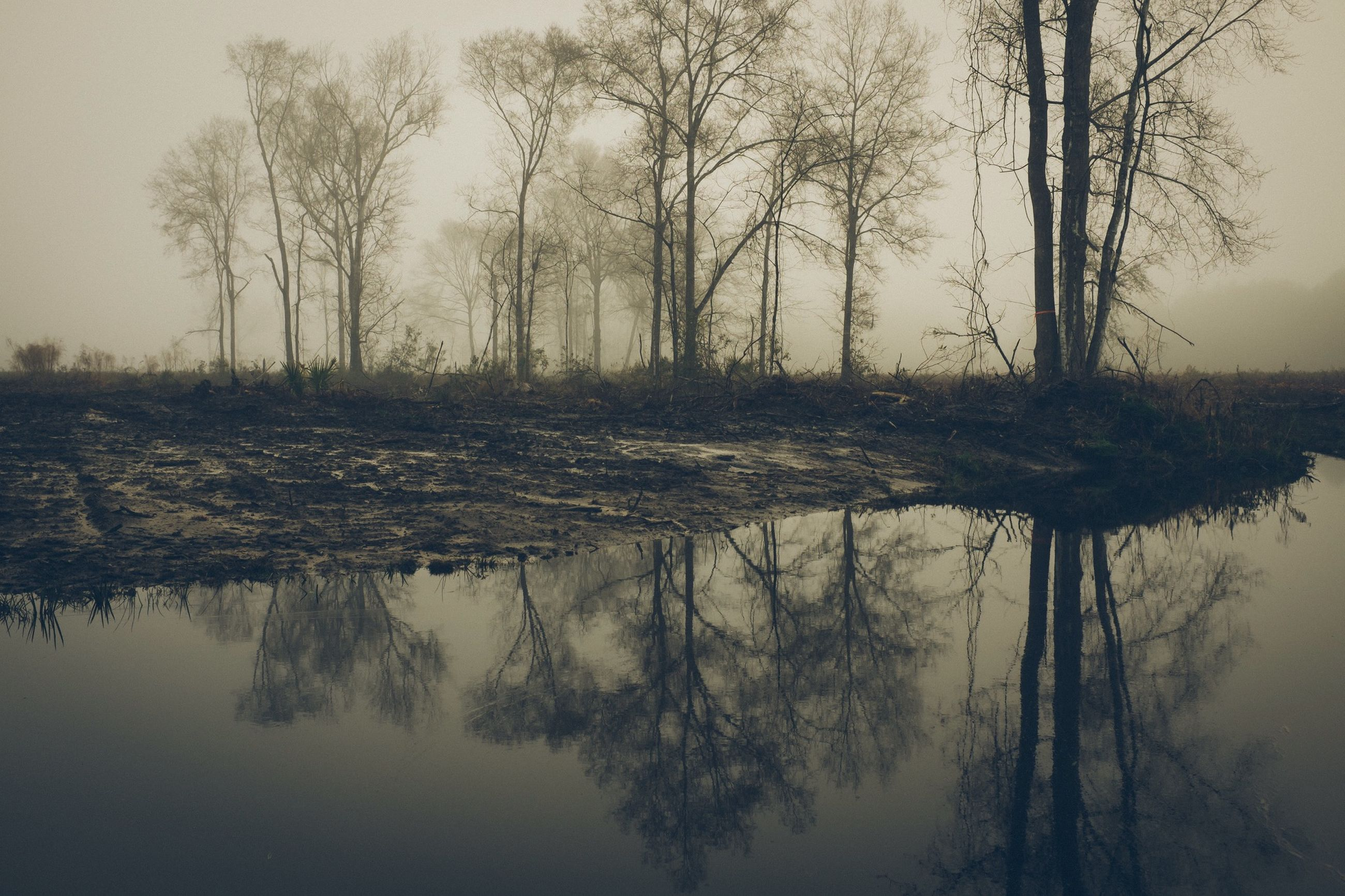 water, tranquility, tree, tranquil scene, reflection, lake, scenics, bare tree, beauty in nature, nature, waterfront, standing water, branch, sky, non-urban scene, river, tree trunk, idyllic, calm, landscape