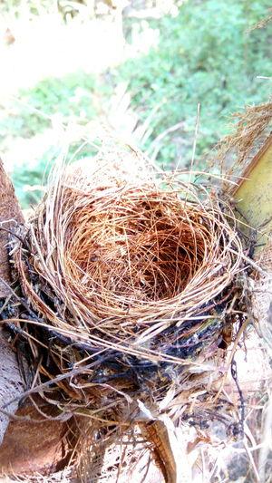 Nest Bird's Nest