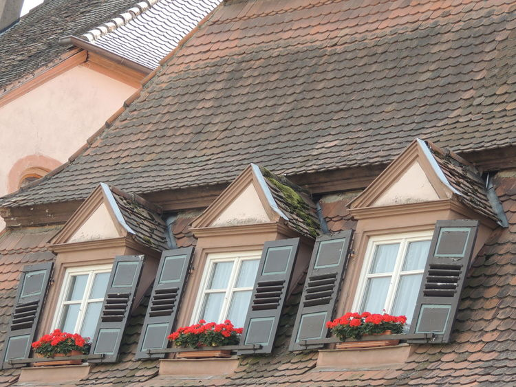 Alsace Alsace France Alsace Streets Alsace-Lorraine Alsacefrance Alsazia Flowers France France French France Photos France Streets France 🇫🇷 Francetourism Francetourisme France🇫🇷 Roof Roofs Rooftop Scenery Rooftop View  Rooftops Window Window Reflections Window View Windows