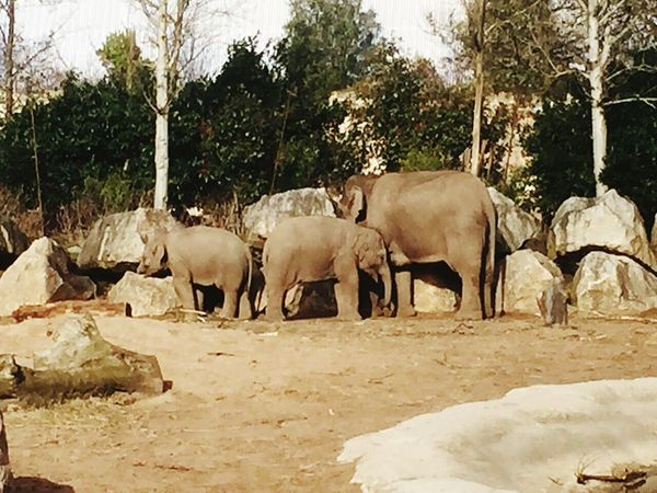 Elephants Day Out Chester Zoo