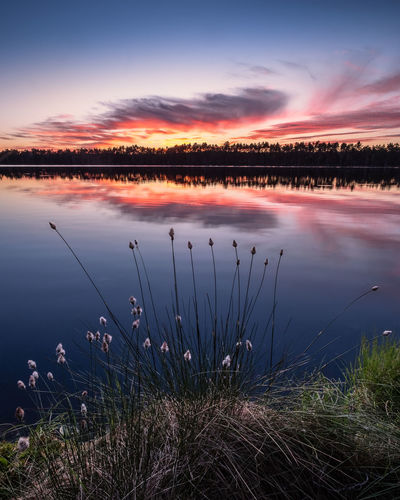 Scenic lake view with flowers and sunset at peaceful evening in Finland Calm Finland Peace And Quiet Sunlight Tranquility Wetland Beauty In Nature Blue Sky Cloud - Sky Dawn Flower Idyllic Lake Nature Non-urban Scene Plant Reflection Scenics - Nature Sky Standing Water Sunrise Sunset Tranquil Scene Tranquility Water The Great Outdoors - 2018 EyeEm Awards
