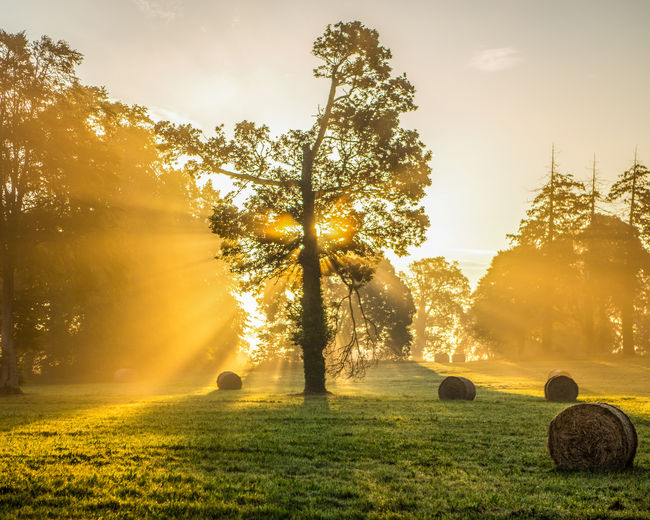 Hay bales on grassy field against sunbeams