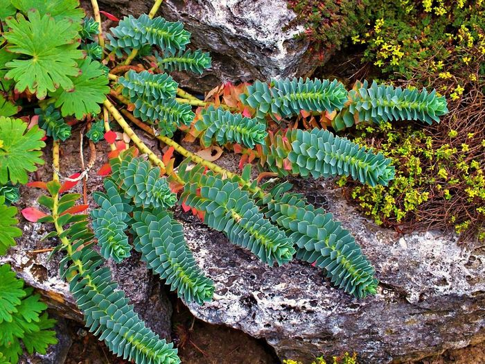 High angle view of fern leaves on land