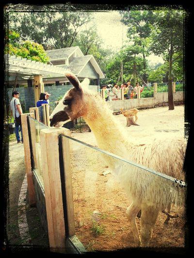 zoo!! Enjoying Life