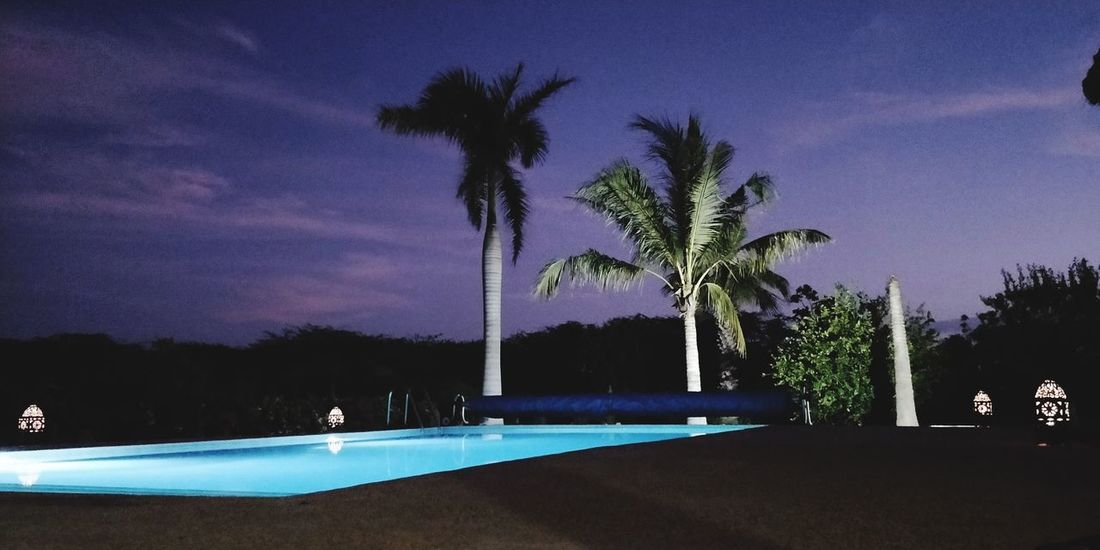 Senegal Africa Afrique Love Africa Réflexion Sky Palmier  Palm Trees Piscine Swimming Pool Tree Palm Tree Star - Space Water Swimming Pool Illuminated Beach Silhouette Tree Trunk Sky Tropical Tree Calm Tranquil Scene Tropical Climate