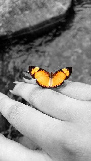 The Places I've Been Today Butterfly On My Hand Nature Nature Photography Nature Textures Patterns Everywhere Patterns In Nature Playing With Animals