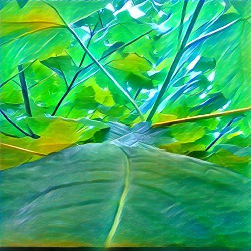 Green Nature Tree Outdoors Prisma