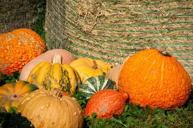 View of pumpkins in autumn