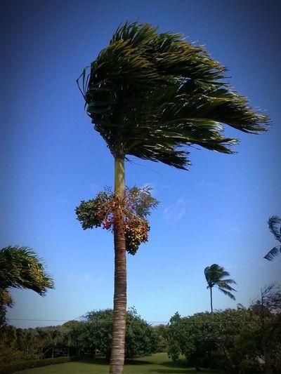 Nature Wind