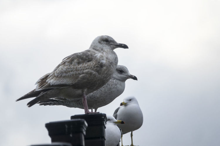 Close-up of birds perching on poles against sky