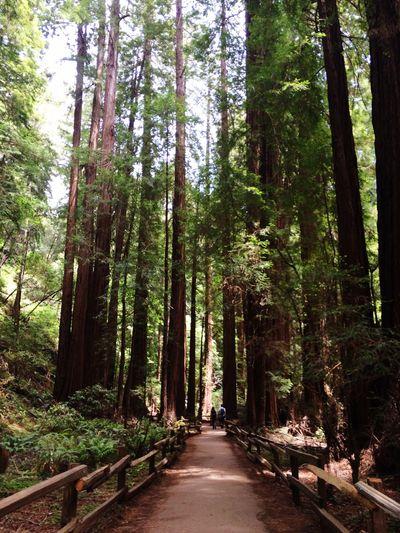 Muir Woods California Redwoods California Coast