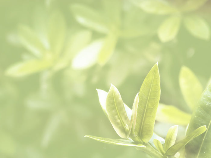 Plant Green Color Leaf Growth Plant Part Close-up No People Beauty In Nature Nature Day Freshness Focus On Foreground Outdoors Selective Focus Tranquility Sunlight Fragility Vulnerability  Green Beginnings Leaves