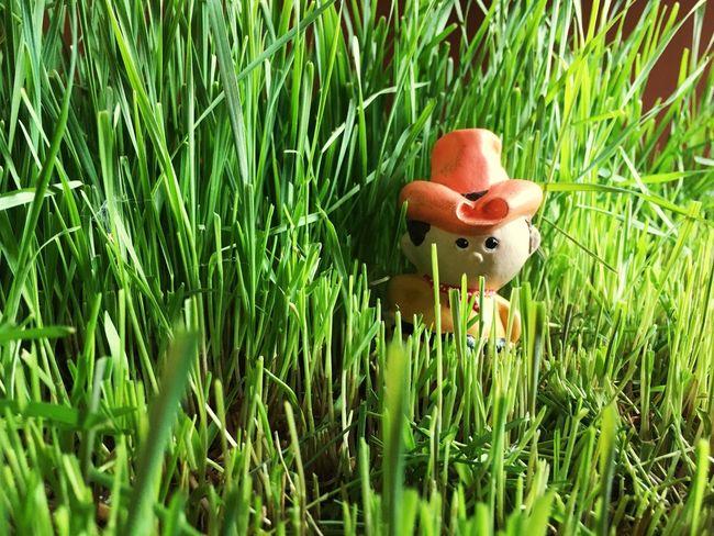 Cowboy in the weeds