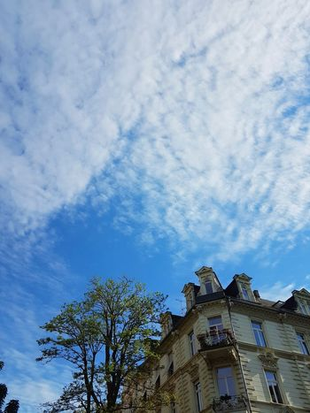 Low Angle View Architecture Cloud - Sky Sky Built Structure Tree Outdoors No People Day Building Exterior Trees Tree History Germany 🇩🇪 Deutschland Wiesbaden, Germany Cloud Architecture Low Angle View