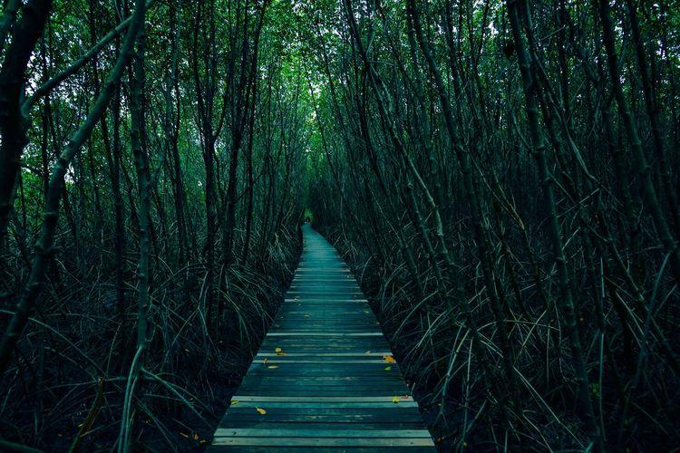 ป่า Plant Tree Growth The Way Forward No People Land Direction Nature Green Color Diminishing Perspective Forest Beauty In Nature Tranquility Outdoors Day Non-urban Scene Footpath Empty Tranquil Scene Architecture