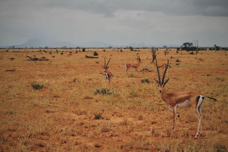 Tsavo East, Kenya. Landscape Tsavo EyeEm Best Edits EyeEm Best Shots Adventure VSCO Travel Safari Travel Destinations Kenya Africa Animals In The Wild Animal Animal Themes Animal Wildlife Safari Animals Beauty In Nature Nature