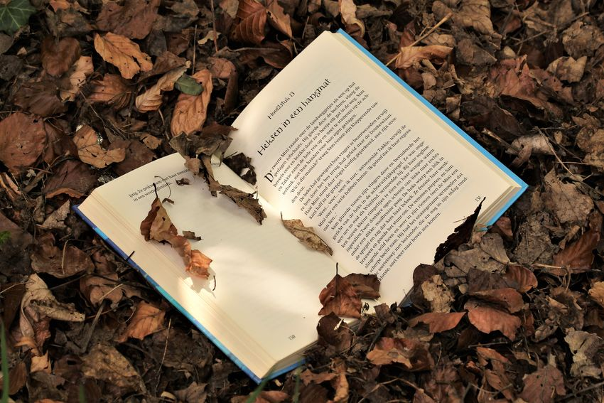 Bibliophile  Book Book About Witches Book In The Forest BookAddict Bookaholic Bookish Bookish Features Booklover Books ♥ Close-up Day Dutch Book Forest Forest Photography High Angle View Ilovebooks Leaf Leaves Nature No People Outdoors Paper Text Witches