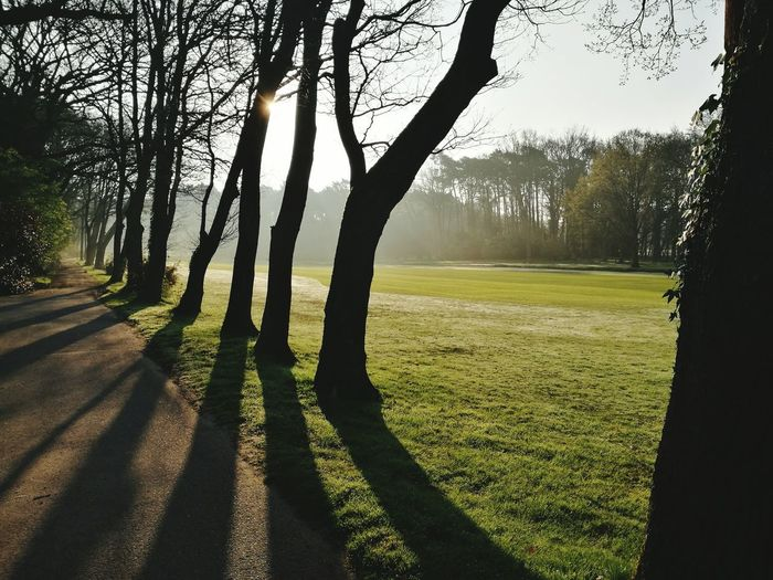 Tree Nature Sunlight Beauty In Nature Grass Growth Shadow Landscape Tranquility Outdoors No People Scenics Day Golf Course Sky Green - Golf Course