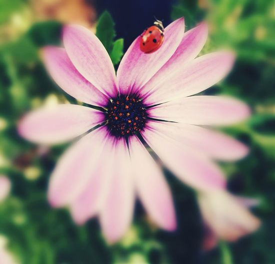 Flower Fragility Flower Head Nature Beauty In Nature Petal Plant Freshness No People Pollen Close-up Outdoors Day 😜