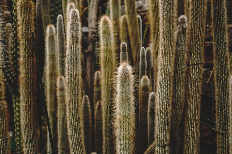 Full frame shot of cactuses