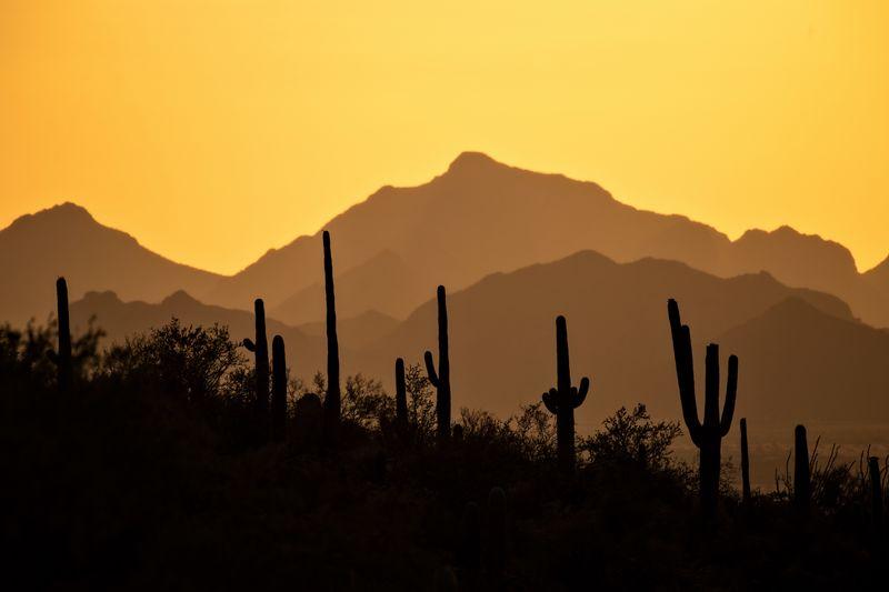 Silhouette cactus plants against orange sky