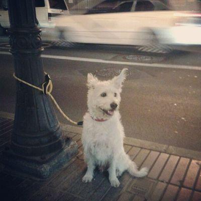 El coche de detrás iba tan rápido que hasta con el viento que produjo, hizo que las orejas de este adorable perro se movieran xD Dog Dogs Perro Perros  Cute Beauty Lindo Adorable Lovely White Fast Car FastCar Igers PicOfTheDay