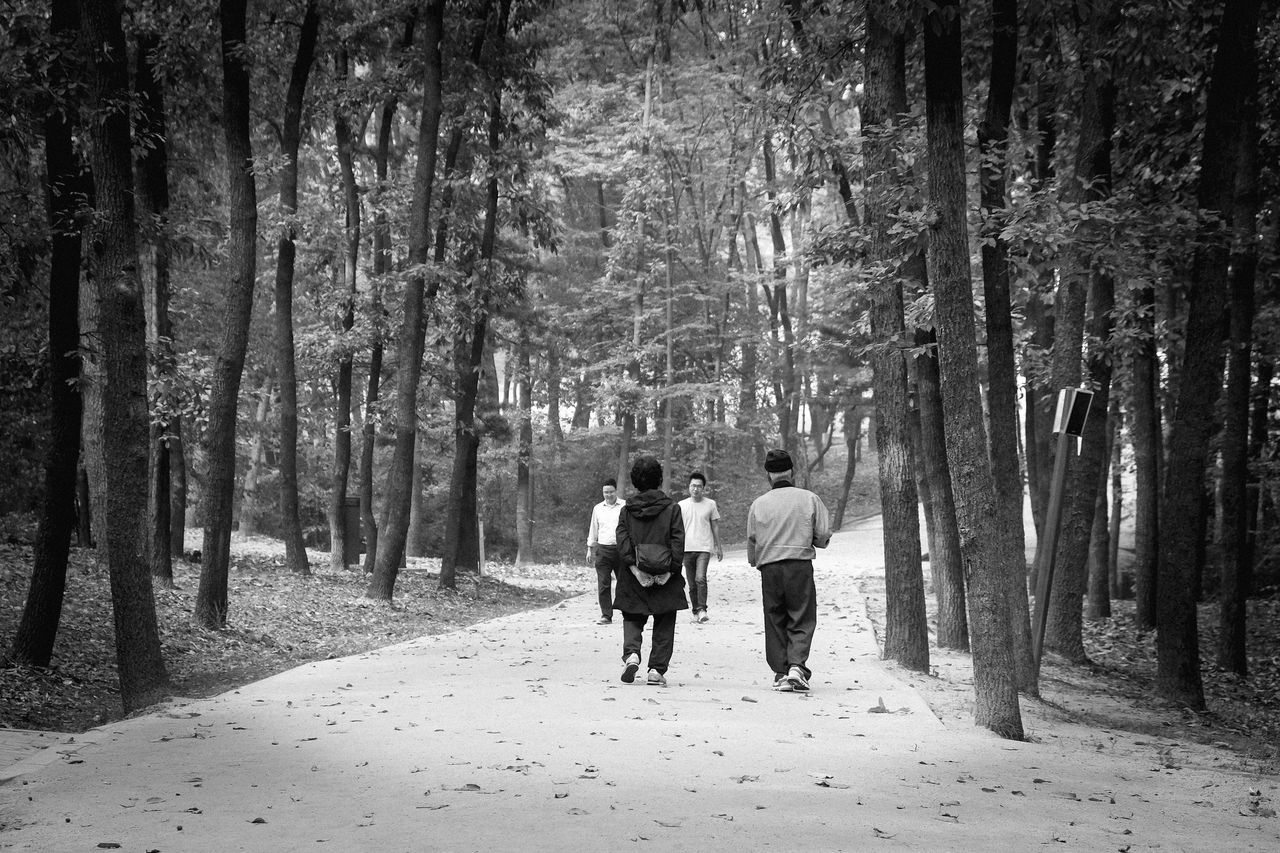 full length, forest, walking, togetherness, rear view, real people, tree, two people, nature, leisure activity, women, men, lifestyles, day, outdoors, adult, adults only, people