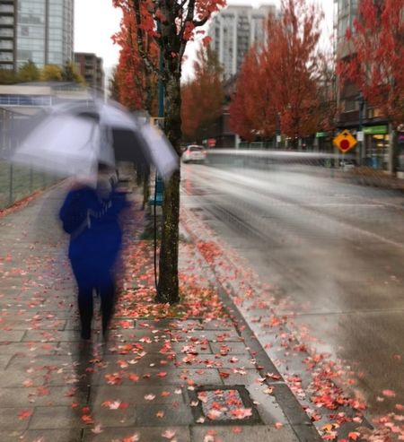 Waking in autum rain Autumn Street Walking One Person City Rainy Days Coquitlam Walking Alone... Walking Around NewToEyeEm