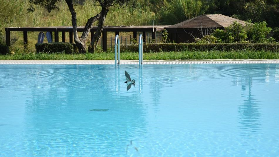 Holidays ☀ in Creta ❤ Hot Day at the Pool when a Bird In Flight came to drink