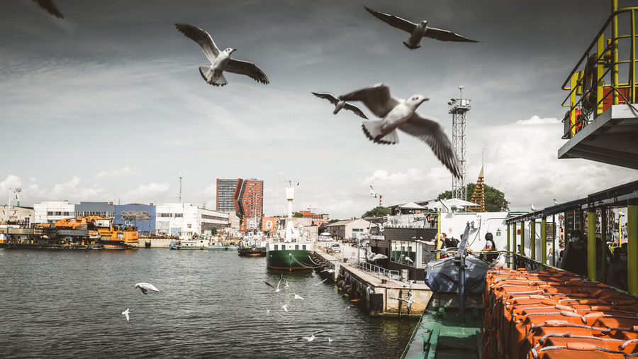 Seagulls flying over canal in city