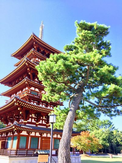 Beutiful  Amazing View Tree Shinto Shrine