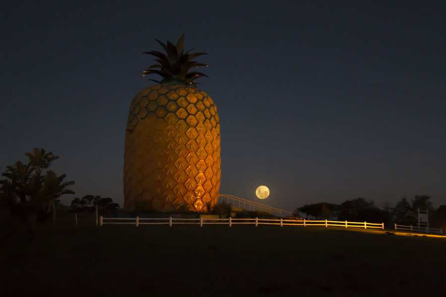 Tropical Fruit Beautiful Light Bright Moonlight Night Brilliant Sky Exotic Exotic Fruit EyEmNewHere Full Moon Illuminated Love Photography 💗💗💗💗💗📷 Lovenightphotography Moonlight Night Night Light Night Lights No People Outdoors Pineapple Scenics Sky Tree Tropical Climate Worlds Largest Pineapple