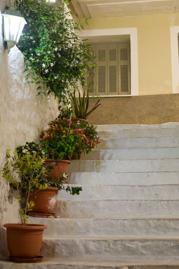 Charming corner in Poros island, Greece Beautiful Mediterranean  Postcard Stairs Architecture Building Building Exterior Flower Flower Pot Flowering Plant Front Or Back Yard Greece House Island Nature No People Outdoors Plant Potted Plant Residential District Staircase Steps And Staircases Tourism Travel Destinations Window