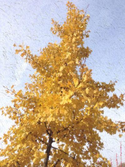 IPSPaint IPhoneography IPhone Glaze Pop Art Popart Kunst Tree Painterly