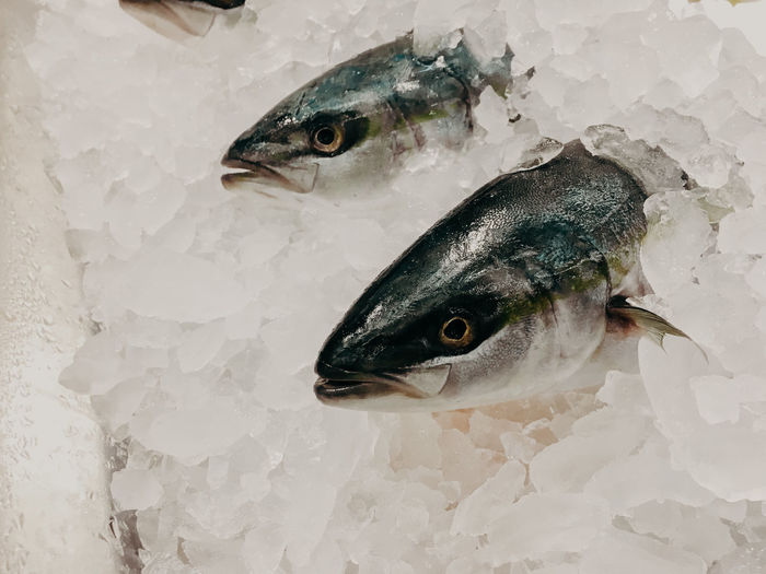 High angle view of fish in ice
