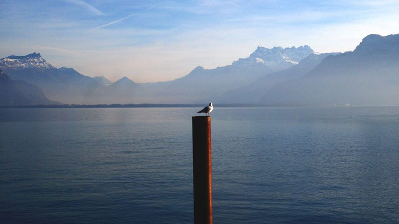 Mountain Water Scenics Nature Tranquility Beauty In Nature Mountain Range Lake Tranquil Scene Sky No People Mountains Blue Sky Blue Landscape_Collection Landscape Taking Photos Bird Sun