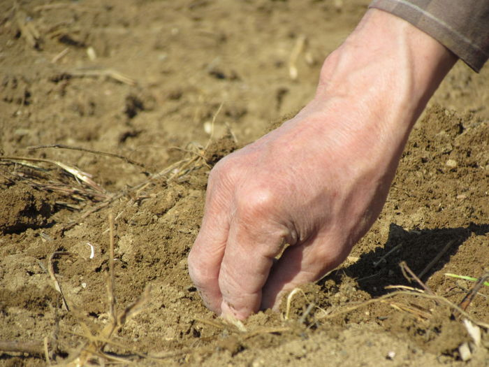 Cropped Hand Of Man Planting Seed In Sand