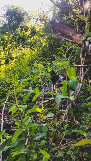 Here Belongs To Me Dog Hiding Hiding From The World Woods Our Home  Mobile Photography Heeler Pets Playtime Domestic Animals Lake Arrowhead Tx Lake Arrowhead Showing Imperfection The Great Outdoors With Adobe Hidden Gems  Lake Arrowhead Tx Pet Portraits