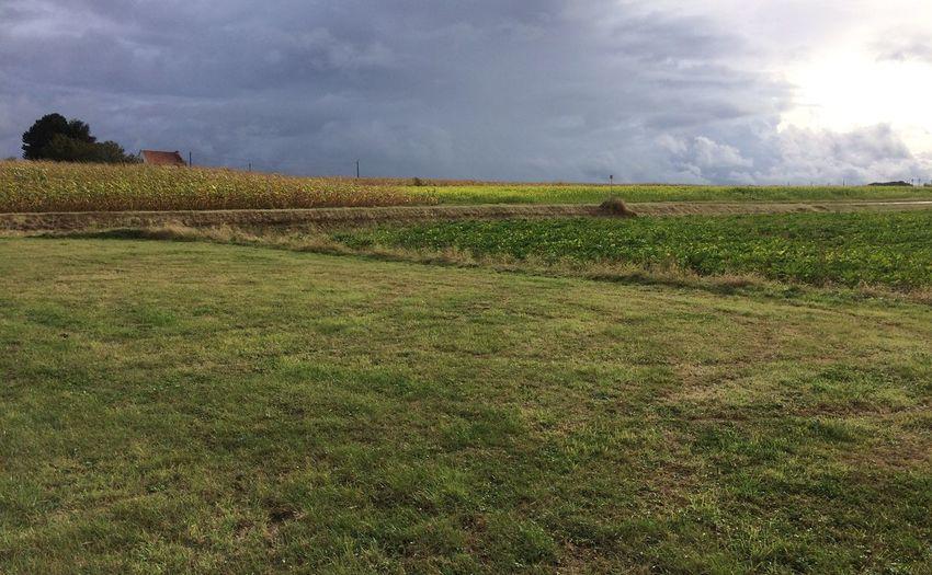Belgium Grass
