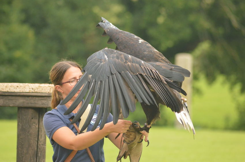 EyeEm Selects One Person Protective Glove Nature Working Bird No Filter, No Edit, Just Photography International Centre For Birds Of Prey ICBP African Fish Eagle Spread Wings Close-up Beauty In Nature Falconry No Edit, No Filter, Just Photography