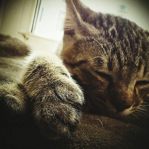 sleeping Cat Lovers Pet Love Cat My Love❤