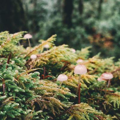 Moss & mushroom party: Part 1 ? Marin Mounttamalpais Mounttam California hiking mushrooms fungi