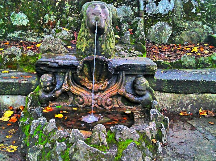 The lion fountain Water Landscape Fountains Hanging Out