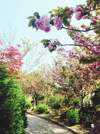 Japan Hyogo Awaji Island Yumebutai Spring