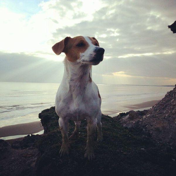 Jrt Jackrusselle Jackrussellsofinstagram Instadogs dogs cute mud holiday walking cliffs sky clouds pose sea sand rocks