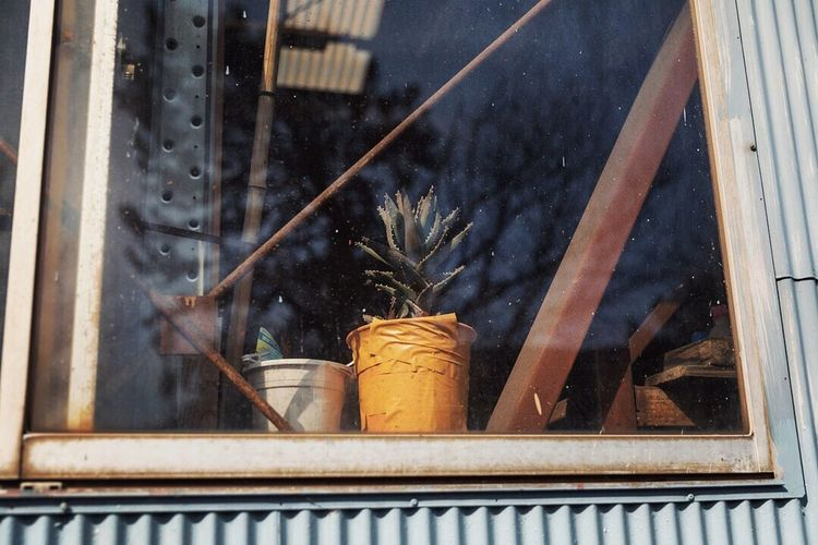 Low angle view of potted plants on window sill