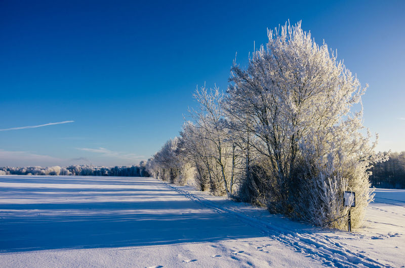 The world in blue and white... Landscape Beauty In Nature Cold Temperature Winter Frosty Morning Eye4photography  Klaquax@home Morning Light Frozen Tree Snow Outdoors Blue Sky Idyllic