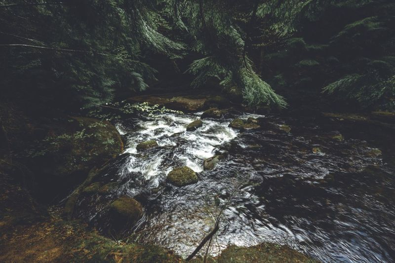 High angle view of stream flowing by rock in forest