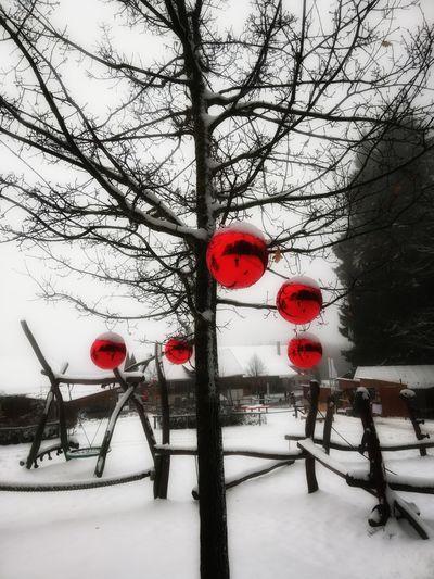 FirstEyeEmPic First Eyem Photo First Eyeem Photo Trees And Sky Photo Photography Landscape Winter Wintertime Weihnachten Weihnachtsmarkt Tree Snow Winter Cold Temperature Red Sky Snowfall