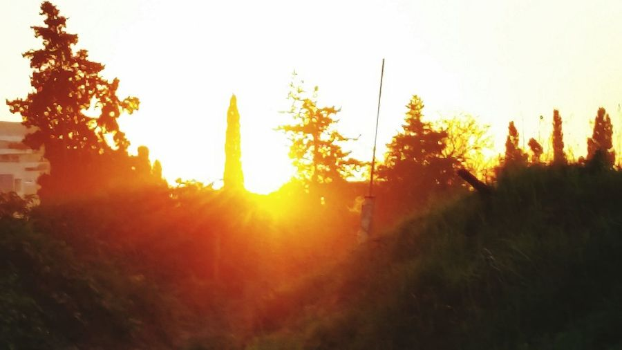 Sunset Blinding